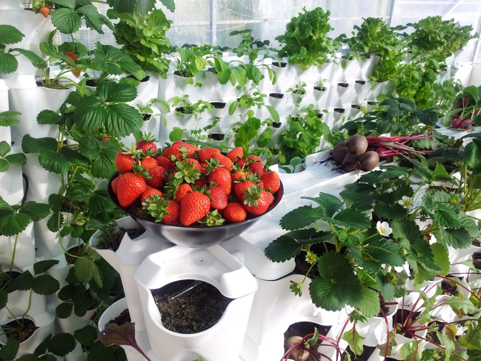 vertical-farming-diverse-1