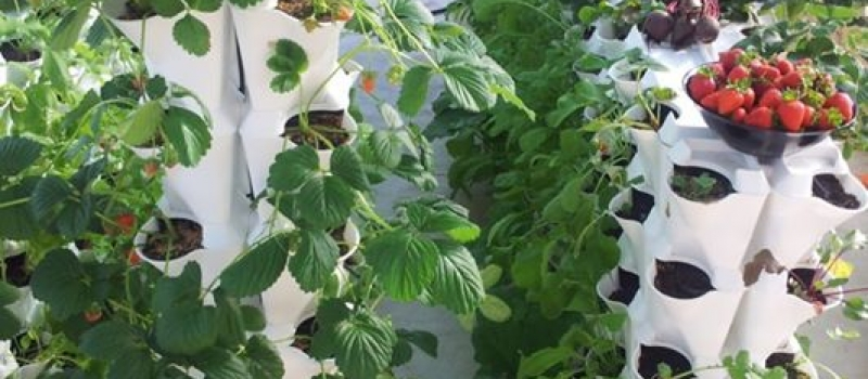 vertical-farming-diverse-2